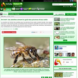 En bref : les abeilles aiment le goût des piscines d'eau salée