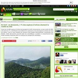 en Amazonie, 1 % des espèces d'arbres stockent la moitié du CO2