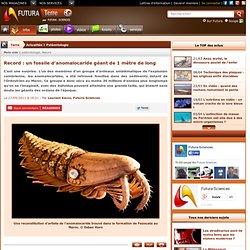 Record : un fossile d'anomalocaride géant de 1 mètre de long