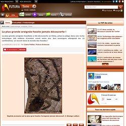 La plus grande araignée fossile jamais découverte !-Mozilla Firefox