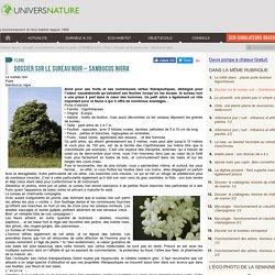 Dossier sur le sureau noir - Sambucus nigra