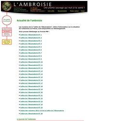 L'actualité de l'ambroisie