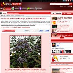 Les secrets du Dichroa febrifuga, plante médicinale chinoise
