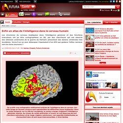 Enfin un atlas de l'intelligence dans le cerveau humain