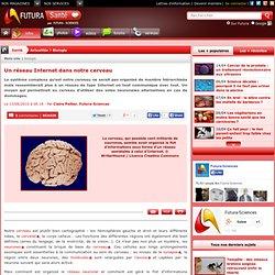Un réseau Internet dans notre cerveau