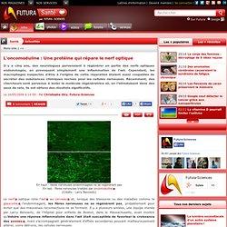 L'oncomoduline : Une protéine qui répare le nerf optique