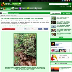 Un arbuste philippin accumule du nickel dans ses feuilles