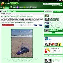 FUTURA SCIENCES 10/08/11 Les physalies : fausses méduses mais vrai danger