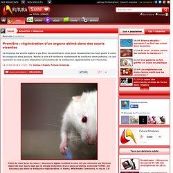 Première : régénération d'un organe abîmé dans des souris vivantes