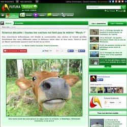 """Science décalée : toutes les vaches ne font pas le même """"Meuh !"""""""