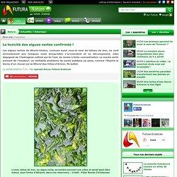 La toxicité des algues vertes confirmée !
