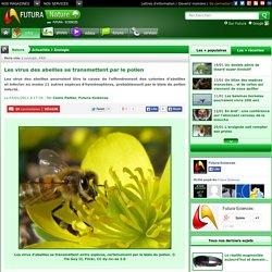 Les virus des abeilles se transmettent par le pollen