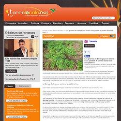 Les graines de Moringa pour rendre l'eau potable. A planter dans tous nos jardins! - Terre Locale Portail d'actualités, entreprises, artisans, Bien être & Bio en Martinique et aux Antilles