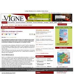 Gard : Début desvendanges àVergèze