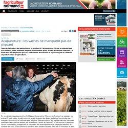 Acupuncture : les vaches ne manquent pas de piquant