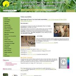 ADAGE 35 Huiles essentielles pour les bovins