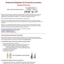 Adaptation for Cursorial Locomotion