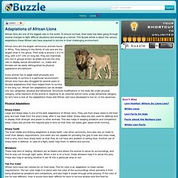 Adaptations of African Lions