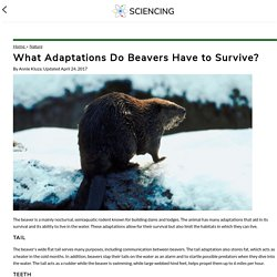 What Adaptations Do Beavers Have to Survive?