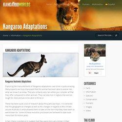 Kangaroo Adaptations - Kangaroo Facts and Information