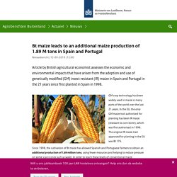 AGROBERICHTENBUITENLAND_NL 12/09/19 Bt maize leads to an additional maize production of 1.89 M tons in Spain and Portugal