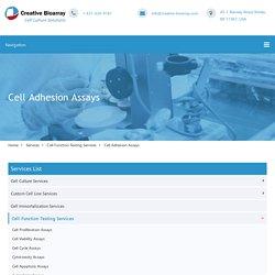 Cell Adhesion Assays - Creative Bioarray