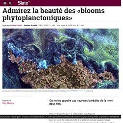 Admirez la beauté des «blooms phytoplanctoniques»