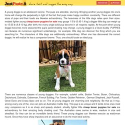 Searching for Akc Boxer Puppies for Sale Near Me at Lowest Price