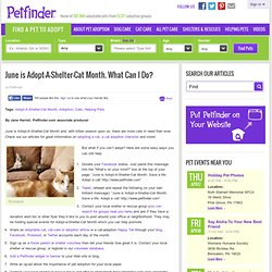 June is Adopt-A-Shelter-Cat Month. What Can I Do?: Adopt-A-Shelter-Cat Month: Before You Adopt