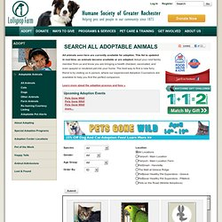 Adoptable Animals - Lollypop Farm