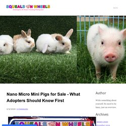 Nano Micro Mini Pigs for Sale - What Adopters Should Know First