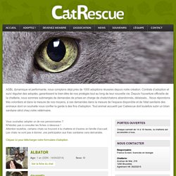 Adoptez un chat ! - CatRescue.be
