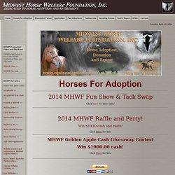 Adoption Horses