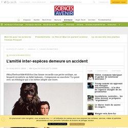 L'adoption entre espèces est un accident - Sciencesetavenir.fr