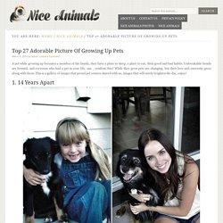nice-animals
