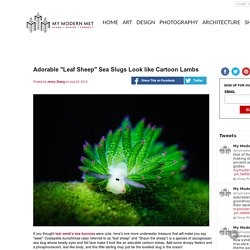 "Adorable ""Leaf Sheep"" Sea Slugs Look like Cartoon Lambs"