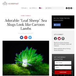 """Adorable """"Leaf Sheep"""" Sea Slugs click 2x"""