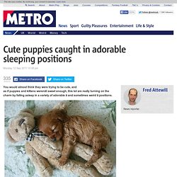 Cute puppies caught in adorable sleeping positions | Metro.co.uk - StumbleUpon