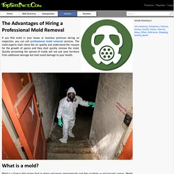 The Advantages of Hiring a Professional Mold Removal