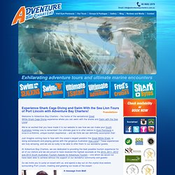 Adventure Bay Charters - Swim with the tuna, swim with the sea lions, swim with the great white shark - shark cage diving