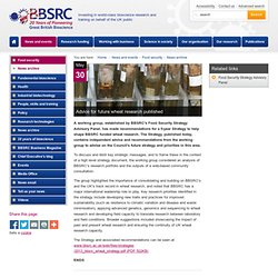 BBSRC 30/05/13 Advice for future wheat research published