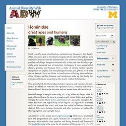 Hominidae: Information