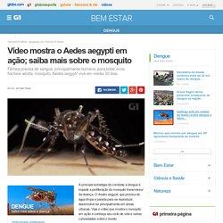 Vídeo mostra o Aedes aegypti em ação; saiba mais sobre o mosquito - notícias em Dengue