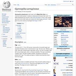 Gymnopilus aeruginosus
