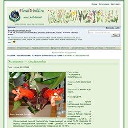 Эсхинантус - Aeschynanthus описание и уход на FloralWorld.ru