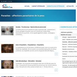 Parasites - affections parasitaires de la peau - Beco - Belgique