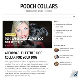 Top 3 Affordable Leather Dog Collar To Buy - Pooch Collars