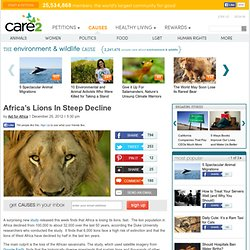 Africa's Lions In Steep Decline
