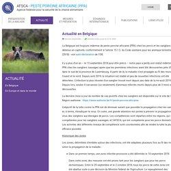 Peste porcine africaine: Actualité en Belgique