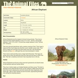 African Elephant: The Animal Files